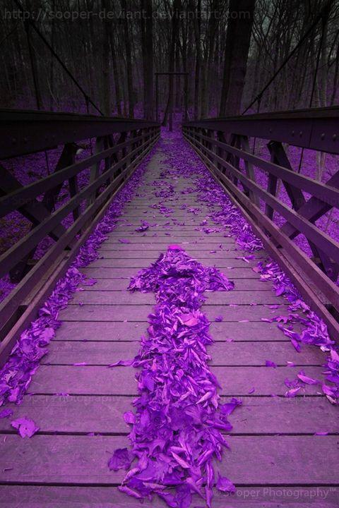 b343cb545edad4eb02b5d84d85592e3e--purple-love-shades-of-purple